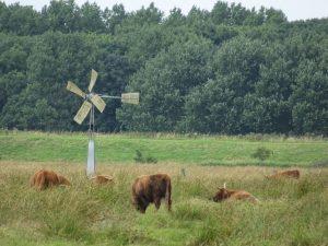 Net voor Amsterdam kwam ik deze koeien tegen, mooie rustige omgeving vlak bij de stad.