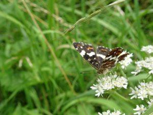 mooie natuur onderweg, vlinder