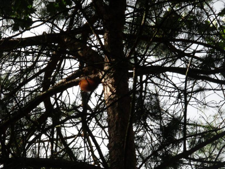 weert roermond eekhoornstaart