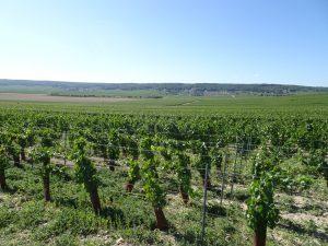 Cormontreuil naar Epernay - champagne 1