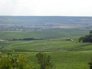 Cormontreuil naar Epernay - champagne uitzicht