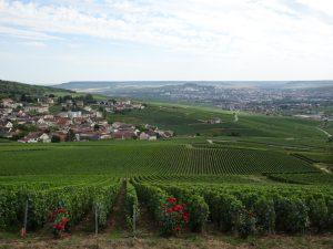 Cormontreuil naar Epernay -champagne 2