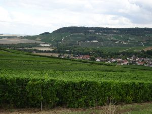 Epernay - Montmort Lucy - champagne veld