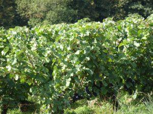 Montmort-Lucy - Sezanne, wijn