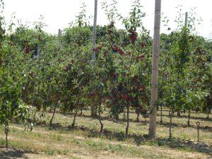 Montmort-Lucy - Sezanne, appelbomen