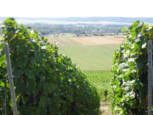 Montmort-Lucy - Sezanne, wijngaarden