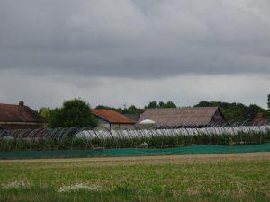 Sezanne naar Mery sur Seine frambozenboerderij