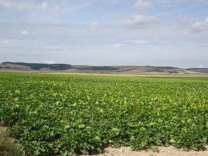 Troyes naar Sommeval suikerbietenvelden