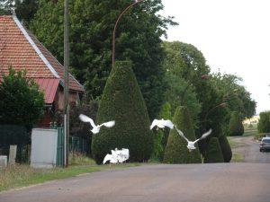 Sommeval naar Flogny-la-chapelle ganzen2