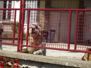 Sommeval naar Flogny-la-chapelle honden alarm 1