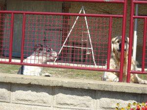 Sommeval naar Flogny-la-chapelle honden alarm 2
