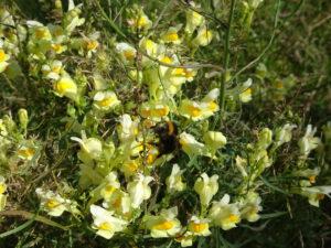 gele bloemen en bij Marigny-l'Eglise naar brassy