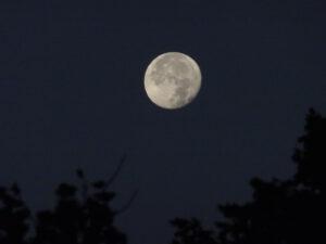 maan planchez