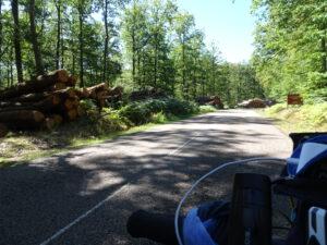 bomen in bos Brassy naar Planchez