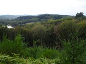 uitzicht kerstboom morvan onderweg Arleuf naar Larochemillay