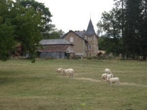 koeien boerderij larochemillau naar Issy l'Éveque
